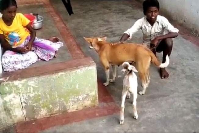 Goat, Dog feed, Social media viral