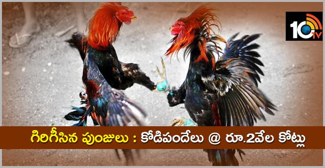 Cock Fight Bettings In Andhra Pradesh