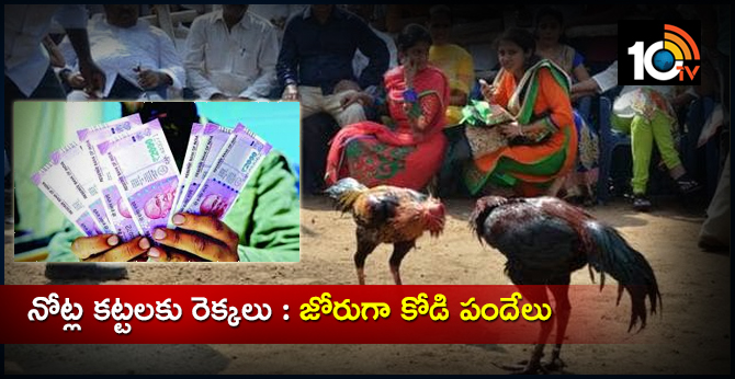 Cock Fight In Andhra Pradesh
