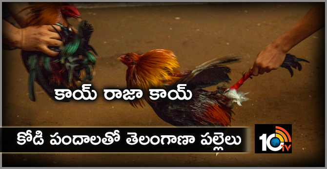 Cockfight in Telangana Villages