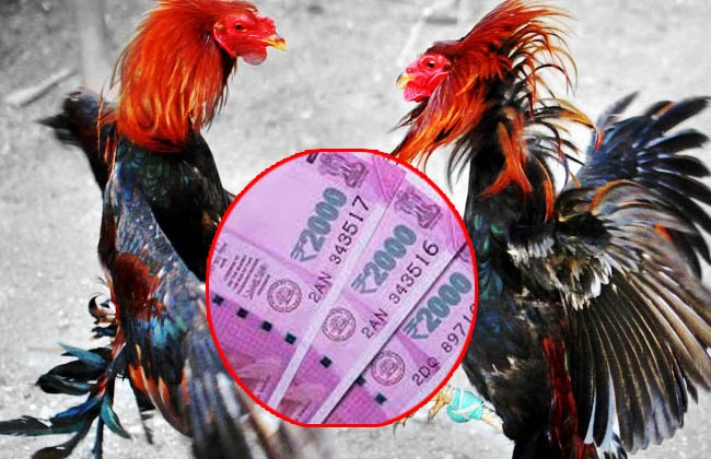 Cockfight punters duped with fake notes