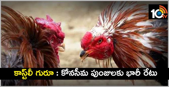 Highest Price For Konaseema Cocks