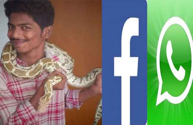 Snakes Business in Social Media