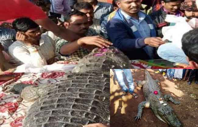 The crocodile death in the village