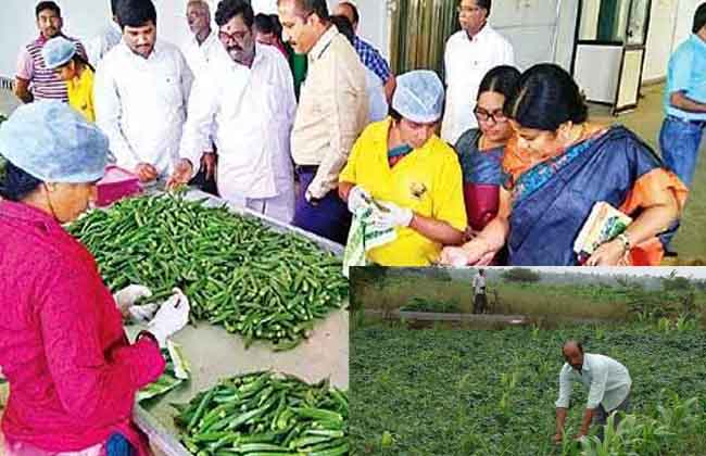 Horticulture is exported to Germany by organic farming