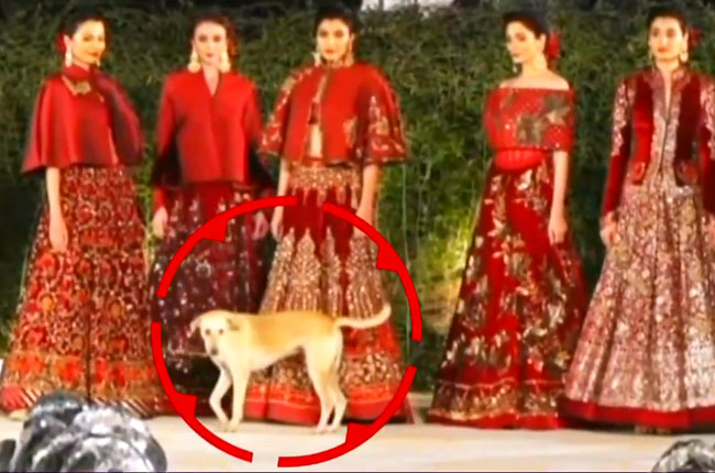 Blenders Pride Fashion Tour in Mumbai : dog ramp walk
