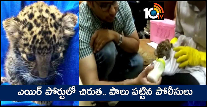 Leopard Cub Smuggled From Bangkok To Chennai, Airport Staff Feed It