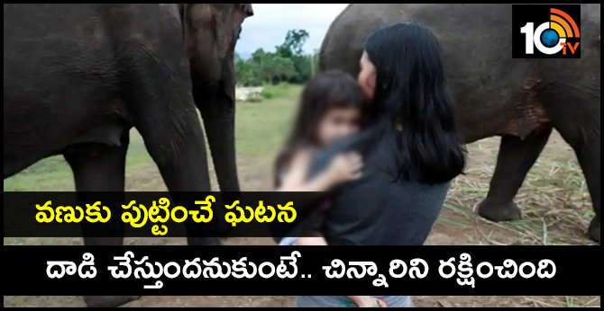 One Elephant Protects 4-Year-Old Girl From Others In Elephant Herd