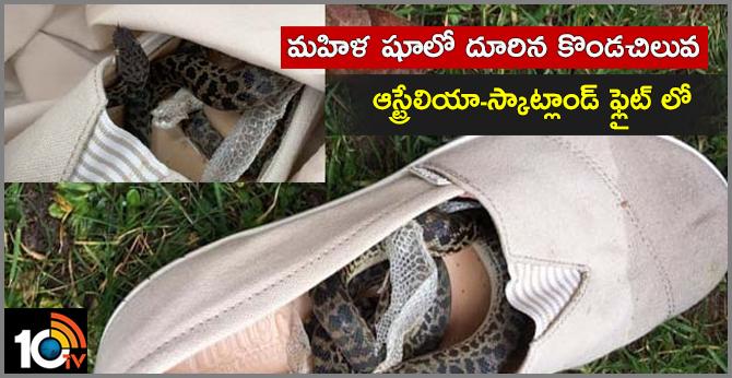 Snake on a Plane..,000-mile flight in woman's shoe