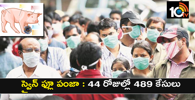 Swine Flu Virus: 489 swine flu cases in 44 days in Telangana