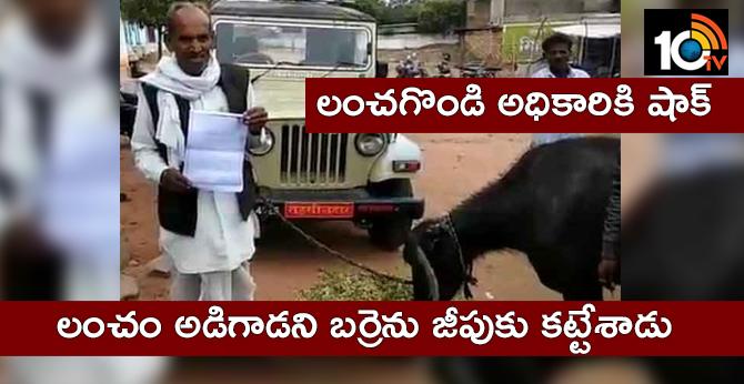 farmer ties buffalo to officer's vehicle