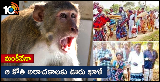 monkey attack local  village people