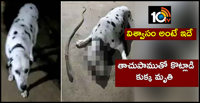 Dog fights off cobra to guard owner's life