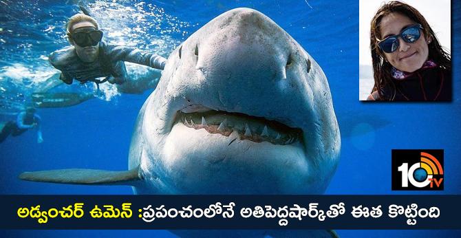 Photographer Kimberley Jeffries, who swims the world's largest shark