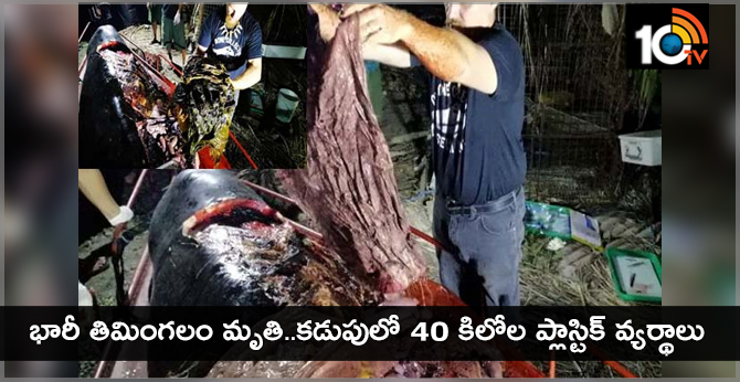 Plastic Alert:Whale Found With 40KG Of Plastic Pollution In Stomach