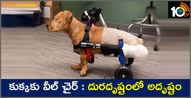 The dog that lost the legs in the accident ..specifically the wheelchair