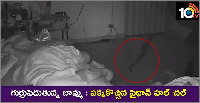 grandma bedroom Python..slithers across bedroom before biting grandma, 75, in terrifying footage