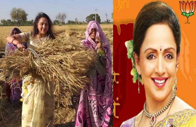 BJP MP candidate Hema Malini is campaigning in the wheat crop field