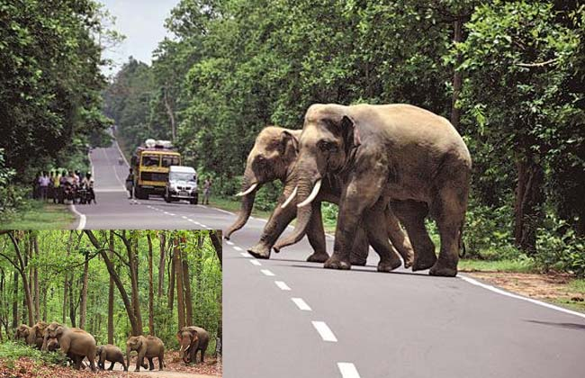 Elephants' problem in the constituencies polling