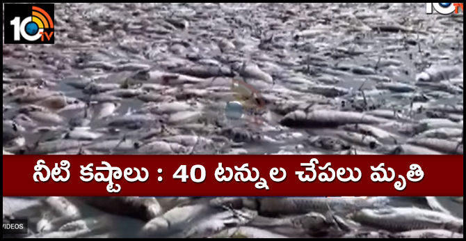 Fishes Died Due To No Water At Wanaparthy Palle Cheruvu