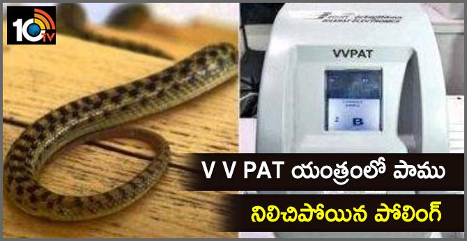 Snake on the V V pad machine