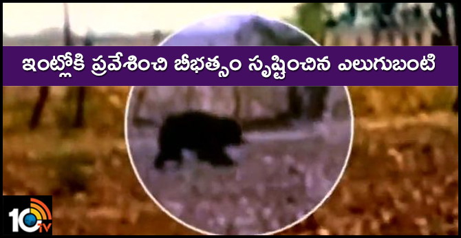bear Wreaking havoc in Asifabad district