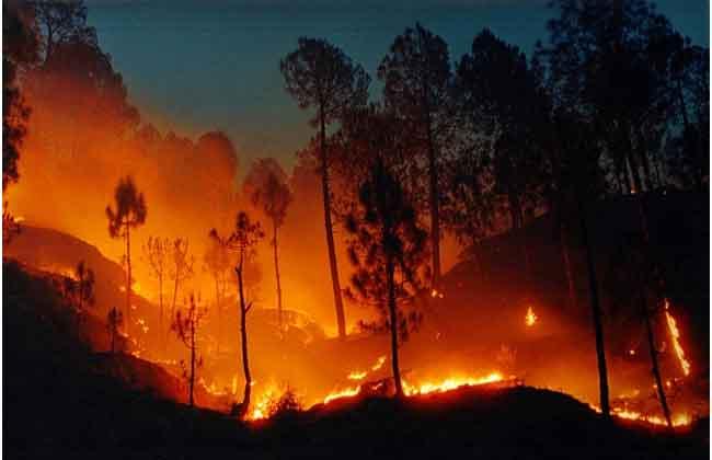 three peoples dead in Madhya Pradesh Hashangabad Forest Wildfire..