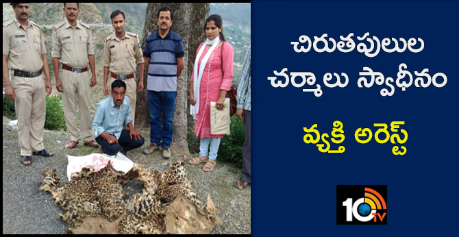 Two leopard skins recovered from an individual in Chowari, Himachal Pradesh
