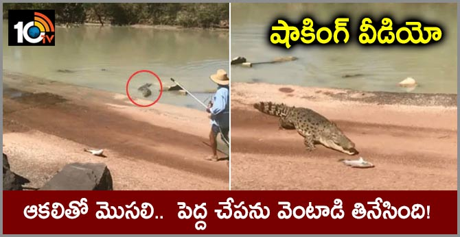 In Shocking Video, Hungry Crocodile Snatches Fish From Angler's Line