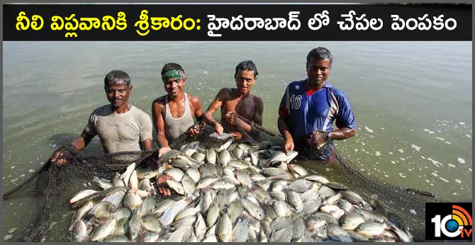 Telangana Government fishery in Hyderabad Pond