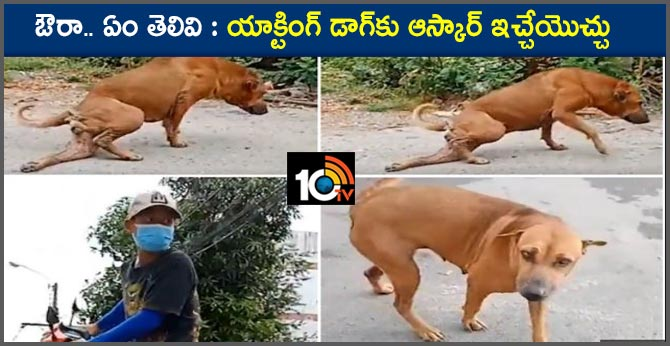 Very clever street dog fakes broken leg to get food and attention from riders in thailand