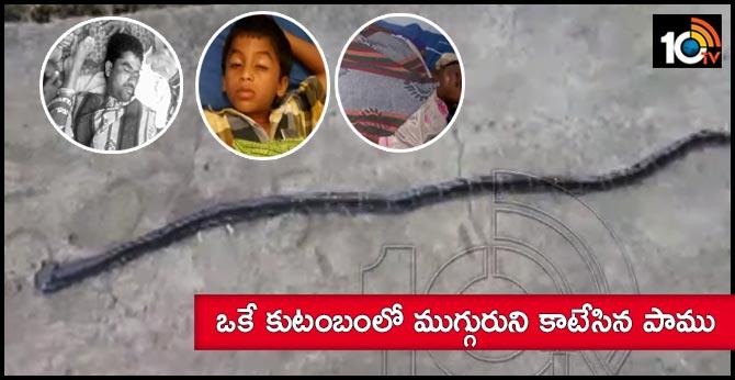 sanke bites three members in a family at mahabubabad