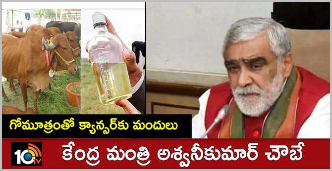 Cow urine to be used in medicines and treatment of cancer: Health Minister Ashwini Choubey