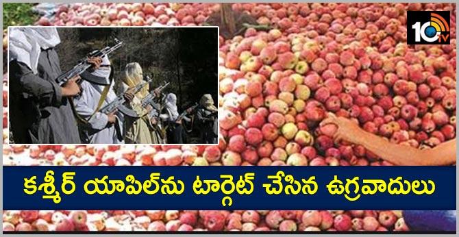 Terrorists targeting Kashmir apple..Fire in apple orchards are terrorists