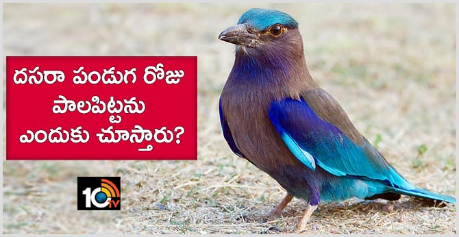 Why Do You See Palapitta On Dussehra Festival Day?