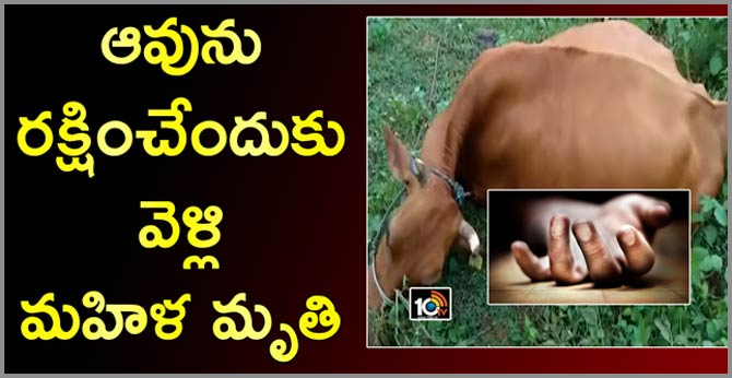 Woman, cow killed with electric shock in visakha