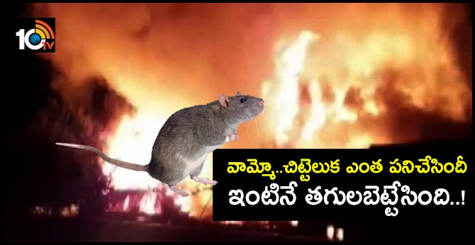 A house burned down due to a mouse On Diwali night in Bareli city of Uttar Pradesh