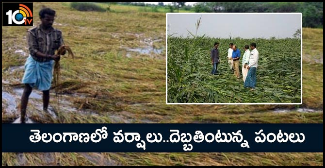 Heavy rains in Telangana Damaged crops