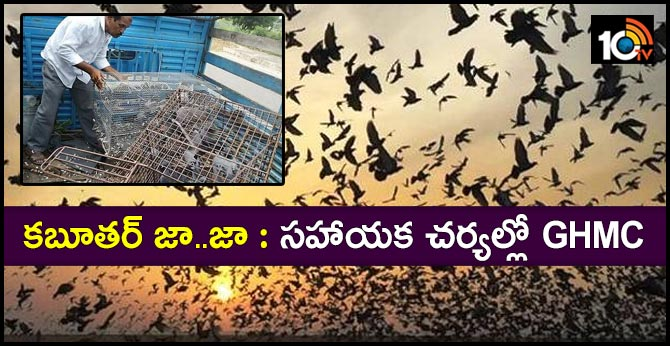 Difficulties with Hyderabad pigeons Health At Risk