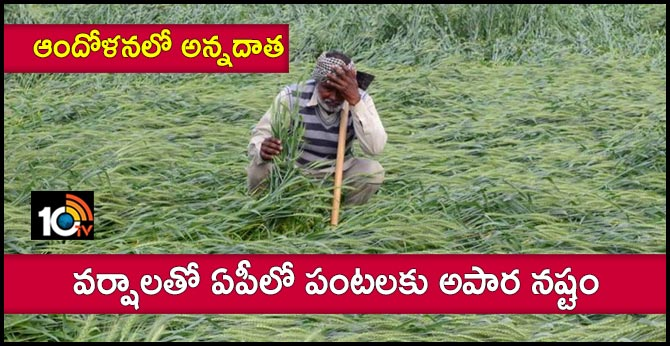 Premature rains in AP Heavy damage to crops