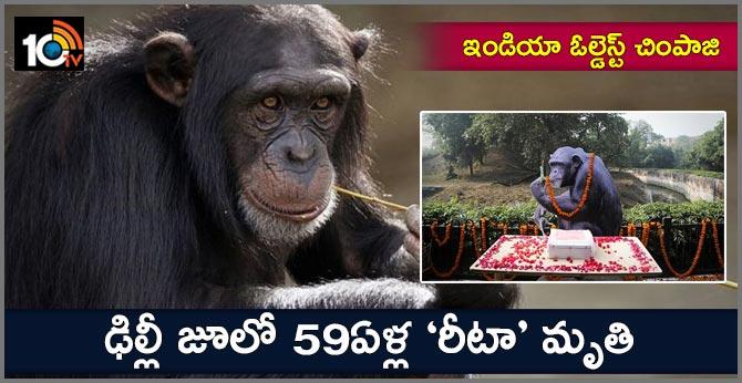 Rita, India's oldest chimpanzee, dies at Delhi Zoo