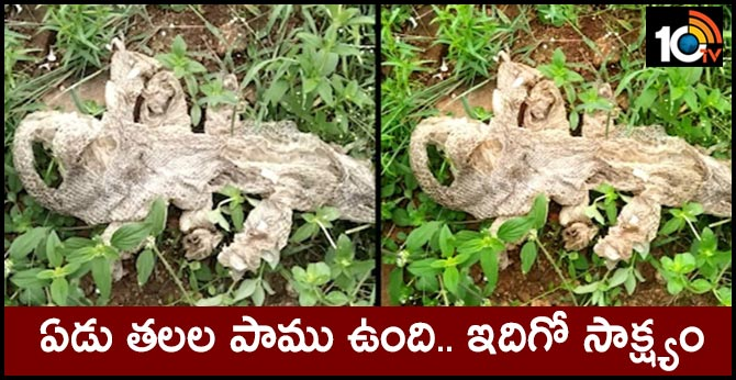 'Seven-headed' snake's skin draws crowds near Bengaluru