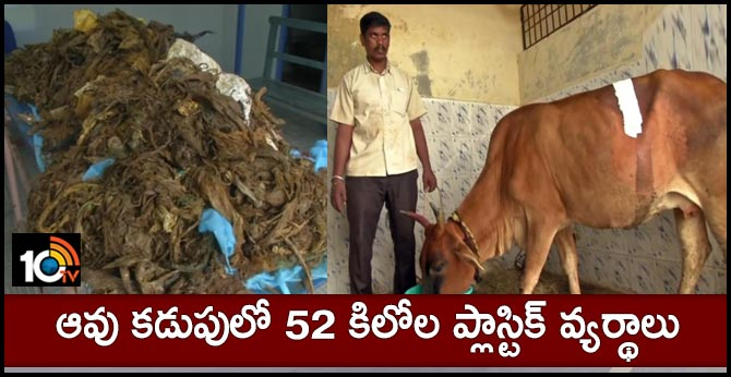 Surgeons of Tamil Nadu Veterinary and Animal Sciences University, Vepery removed 52 kg of plastic wastes (pic 2) from the stomach of a cow