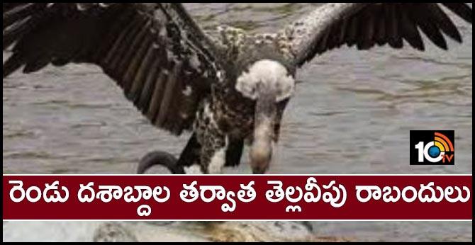 White vultures In Telangana