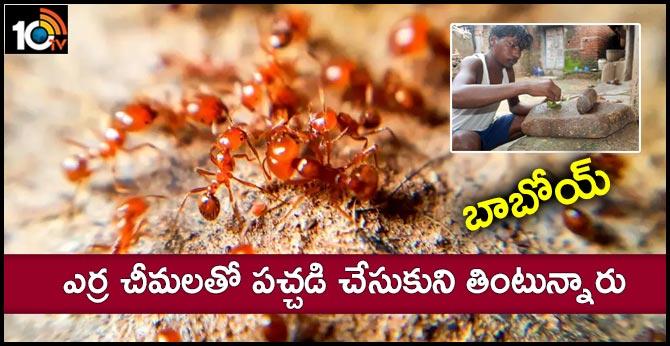 Tribals eat red ants for better eyesight
