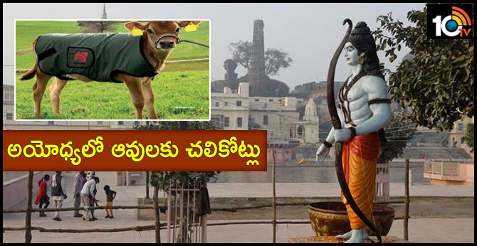 Cows in Ayodhya to get special winter coats this year