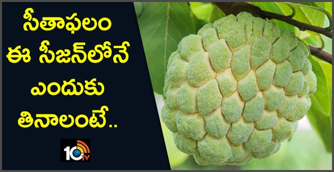 Custard Apple And Its Health Benefits