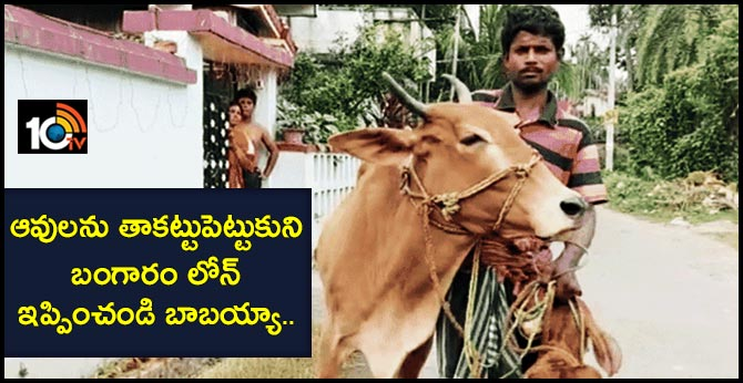 Farmer seeks gold loan for cow