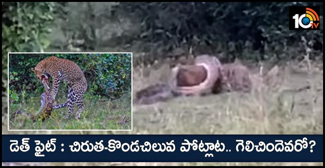 Leopard And Python Caught In A Death Match Video Viral