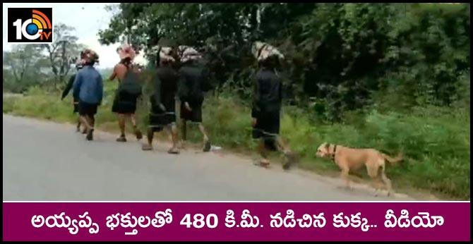 Stray Dog Tags Along Sabari Pilgrims, Treks 480km And Counting